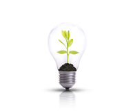 Light bulb against tree. Stock Image