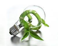 Light bulb on bamboo royalty free stock photo