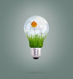 Light bulb with beautiful flower inside Royalty Free Stock Photography
