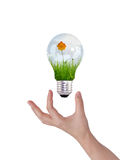Light bulb with beautiful flower inside Stock Image