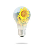 Light bulb with beautiful flower inside. On white background Stock Photos