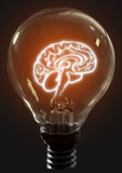 Light bulb brain Stock Image