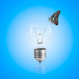 Light bulb with butterfly. Royalty Free Stock Image