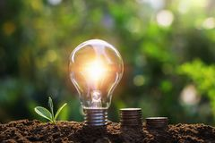 Light bulb with coins and young plant. Saving concept stock image