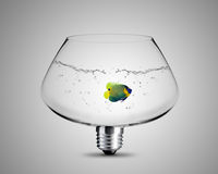 Light bulb concept Stock Images