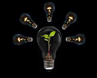 Light Bulb. Concept and Idea for save a power in the world Royalty Free Stock Images