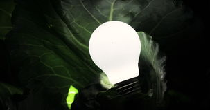 A light bulb in the dark, the lamp lights up in a green leaves. black background, ecology concept stock video footage