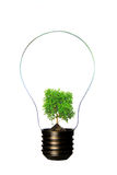 Light bulb. Eco concept: lightbulb with green plant inside Royalty Free Stock Images