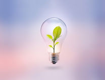 Light bulb with energy and fresh green leaves inside on pastel Stock Image