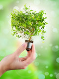 Light bulb in female's hand. (green tree growing out of a bulb Stock Image
