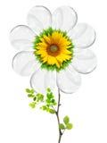 Light bulb flower royalty free stock photo
