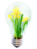 Light bulb with flower inside Stock Photo