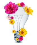 Light bulb with flowers Royalty Free Stock Photography