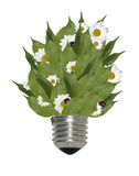 Light bulb with flowers and leaves Stock Photography