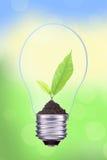 Light bulb with fresh green leaves inside on green bokeh backgro Stock Image