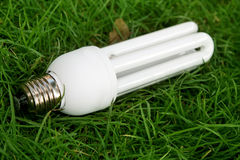 light bulb in grass Stock Photo