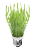 Light bulb on grass Stock Photography