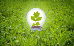 Light bulb in grass. Royalty Free Stock Image