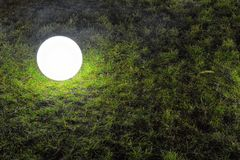 Light bulb on grass Stock Images