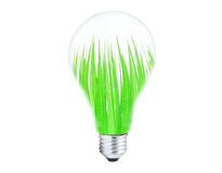 Light bulb with grass inside Royalty Free Stock Photo