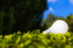 Light bulb on grasses Stock Photography