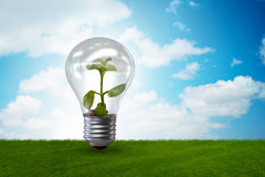 The light bulb in green environment concept - 3d rendering Royalty Free Stock Image