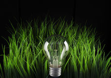 Light bulb and green grass Royalty Free Stock Photos