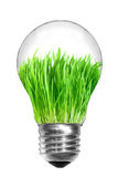 Light bulb with green grass inside Stock Images
