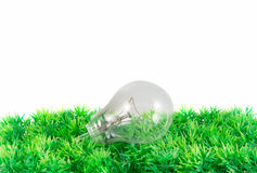 Light bulb on green grass Stock Photos