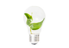 Light Bulb with green leaf inside isolated Stock Image