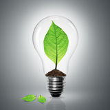 Light bulb green leaves power Stock Image