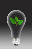 Light bulb and green plant  Royalty Free Stock Image