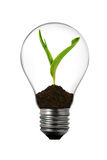 Light bulb with green plant inside Royalty Free Stock Photo