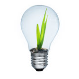 Light bulb and green sprout inside Stock Photos