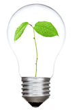 Light bulb with green sprout inside Royalty Free Stock Images