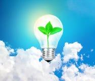 The Light bulb green tree inside on sky background ,eco concept Stock Photos