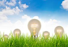 Light bulb grow in the grass against blue sky Stock Photos