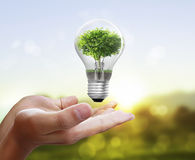 Light bulb, in hand Royalty Free Stock Images