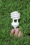 Light bulb in hand on a green grass background Stock Photos