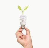 Light bulb in the hand Stock Image