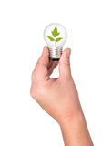 Light bulb in hand with leaves. Royalty Free Stock Photo