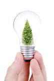 Light bulb in hands Stock Images