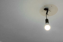 Light Bulb Hanging From Ceiling Illuminated Wire White Blank royalty free stock image