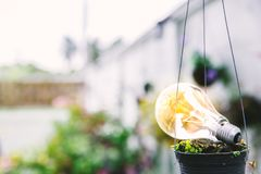 Light bulb in a hanging flowerpot on the wall with botanic garden blur background, Eco system royalty free stock photo