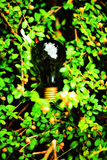 Light bulb held in palm Royalty Free Stock Photo