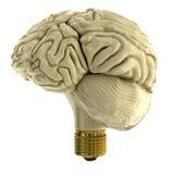 Light bulb human brain Stock Photography