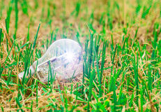 Light bulb idea on the grass Royalty Free Stock Photo