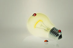 Light-bulb with ladybugs Royalty Free Stock Images