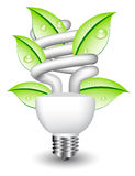 Light bulb with leaf stock photography