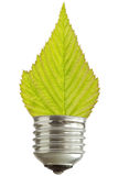 Light bulb with leaf Stock Image